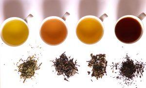 Exista mai multe soiuri de ceai, dar toate reprezinta frunzele aceleiasi plante.