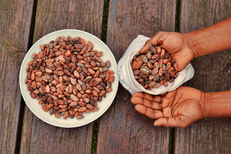 Boabe de cacao - Uleiul